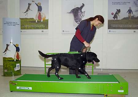 New tool to help diagnose canine arthritis
