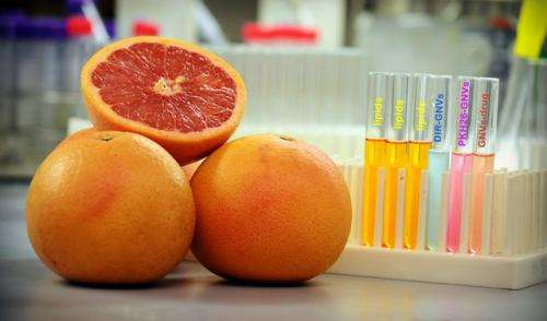Scientists uncover how grapefruits provide a secret weapon in medical drug delivery
