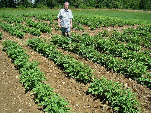 Studies pay off for potato producers