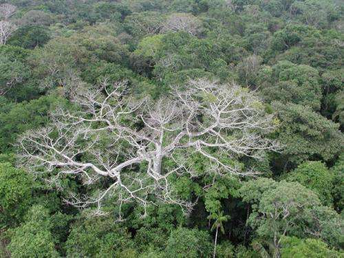 Study finds severe climate jeopardizing Amazon forest