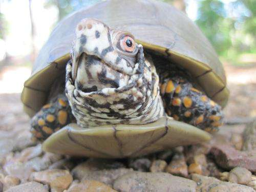 Climate change threatens Northern American turtle habitat