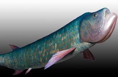Isisford Bulldog fish emerges from 100-million-year slumber