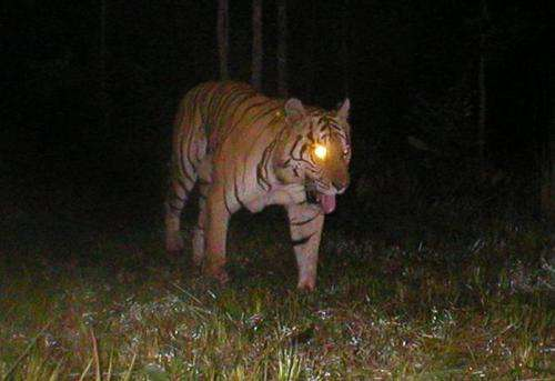 New study reveals scale of persistent illegal tiger trade
