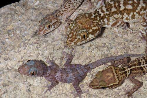 Research suggests Madagascar no longer an evolutionary hotspot