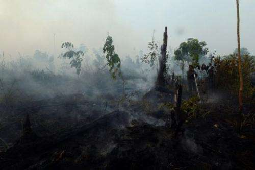 An Indonesian worker from a palm oil concession company extinguishes a forest fire on Sumatra island, June 29, 2013