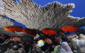 Ocean acidification: Making new discoveries through National Science Foundation research grants