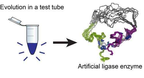 Researchers unveil first artificial enzyme created by evolution in a test tube