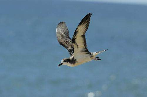 Scientists find impact of open-ocean industrial fishing within centuries of bird bones