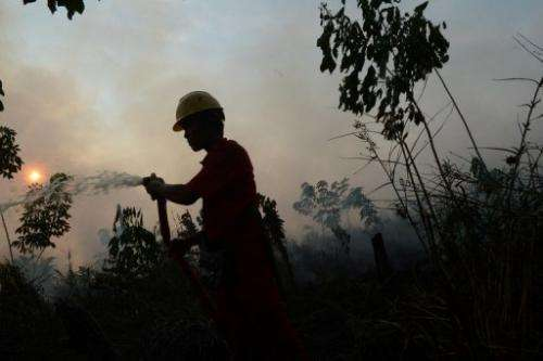 An Indonesian worker from a private palm oil concession company extinguishes a  fire on June 29, 2013 on Sumatra island
