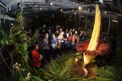 Visitors look at the Arum Titan as it blossoms on November 19, 2012 at the Botanical Garden in Basel, Switzerland