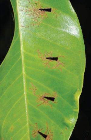 New species of fascinating opportunistic shelter using leaf beetles