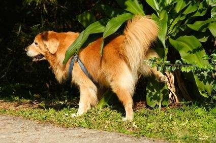 Researchers discover 'law of urination' for animal pee times