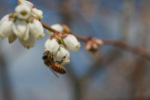 Researchers develop system for assessing how effective species are at pollinating crops