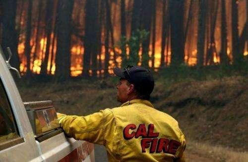 A Cal Fire firefighter looks on as the Rim Fire burns through trees on August 25, 2013 near Groveland, California