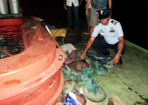 A coast guard inspects pangolins found hidden on a boat in Coron, on April 23, 2013