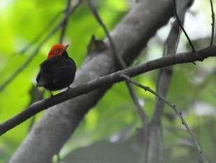 Acrobatic birds aren't as energetic as they look