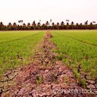 Action to improve soil for global food security