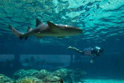 A diver swims in a pool with a cat shark at a water park in the Dominican Republic on July 21, 2012