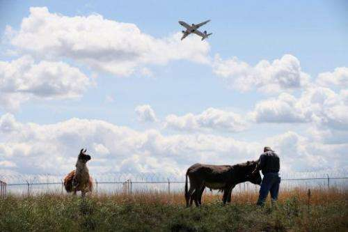 A donkey and llama graze on a plot of land at O'Hare Airport in Chicago on August 13, 2013