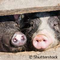 Advanced genomics for livestock breeding, health and welfare