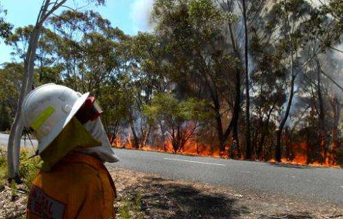 A firefighter monitors a back burn near Mount Victoria in the Blue Mountains on October 21, 2013