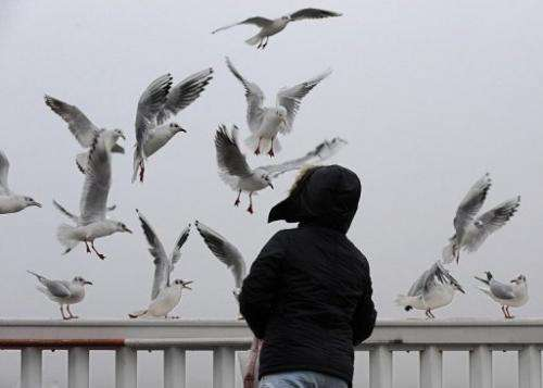 A girl feeds some seagulls in Cuxhaven, northwestern Germany, on December 23, 2012