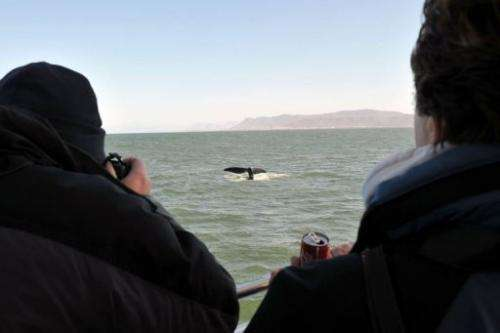 A group of whale watchers observe a Southern Right whale on September 5, 2013 near the town of Hermanus, South Africa