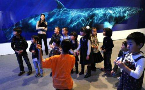 A life-sized photograph of a dwarf minke whale is displayed behind children at a Tokyo exhibition on December 8, 2010