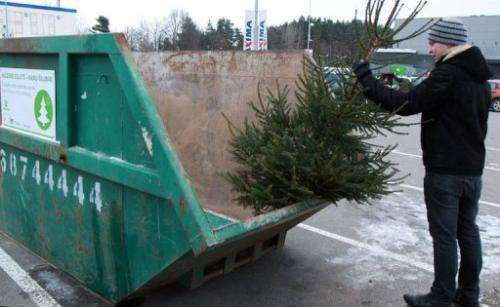 A man puts a Christmas tree into a special container in Vilnius, Lithuania, on January 7, 2013