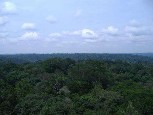 Amazon rainforest more able to withstand drought than previously thought