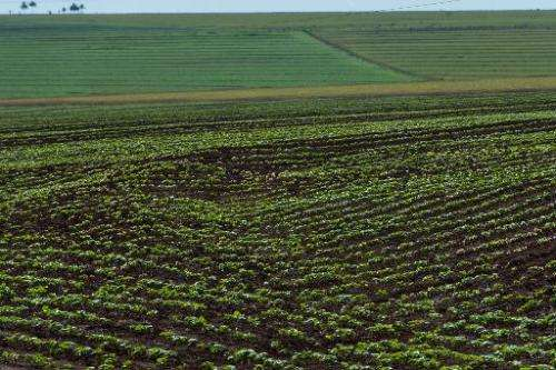 A soybean field in the Cerrado plains near Campo Verde, Mato Grosso state, western Brazil on January 30, 2011