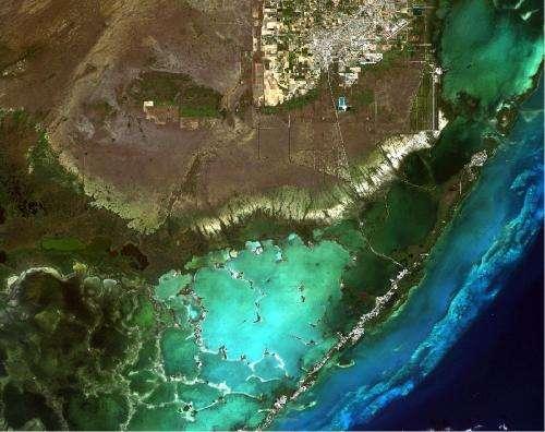 As sea level rises, Everglades' freshwater plants perish
