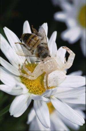 Australia a hot-spot for flora and fauna deception