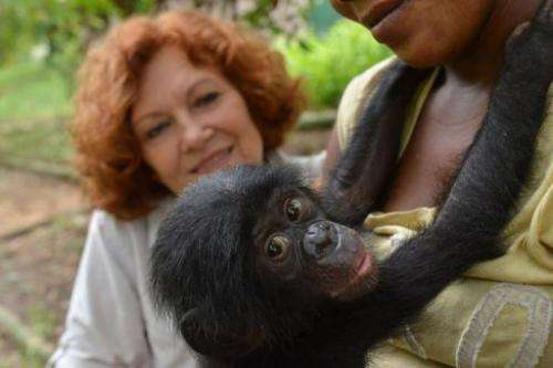 Belgian Claudine Andre looks at an an orphaned bonobo, on March 5, 2013, in Kinshasa