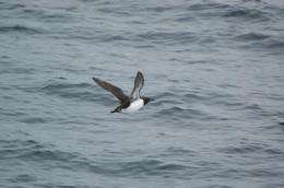 Bering Sea study finds prey density more important to predators than biomass