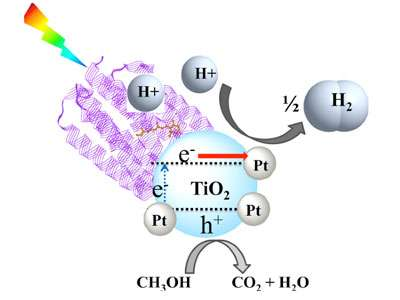 Bio-assisted nanophotocatalyst for hydrogen production