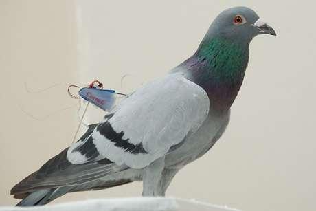 Birds' good vibrations power mini backpacks