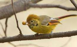 Bird study in China key to eco-health