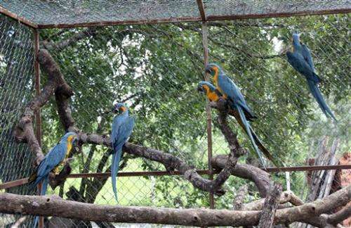 British zoo sends 6 endangered macaws to Bolivia