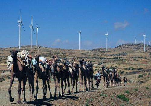Camels walk along the road near turbines at Ashegoda wind farm in Ethiopia's northern Tigray region, on November 28, 2013