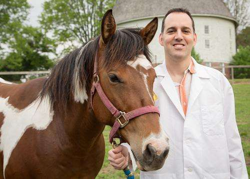 Cellphone technology helps horses recover from surgery