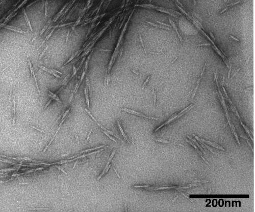 Cellulose nanocrystals possible 'green' wonder material
