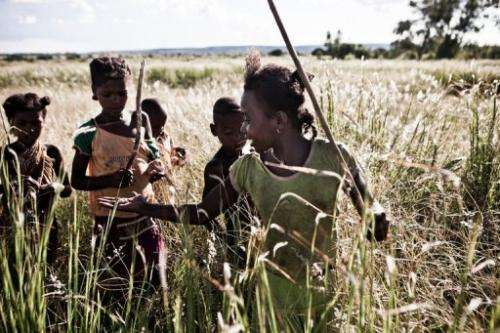 Children hunt for grasshoppers to eat using sticks, Ankilimalangy near the city of Betioky, Madagascar, March 14, 2013