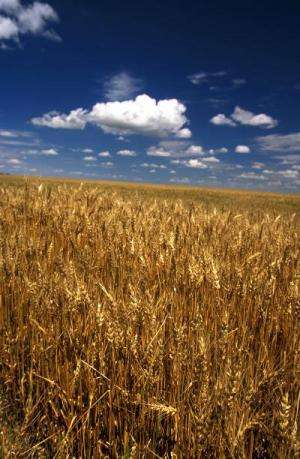 Climate forecasts shown to warn of crop failures