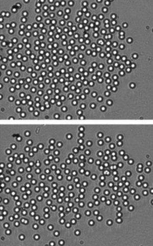 Controlling particles for directed self-assembly of colloidal crystals