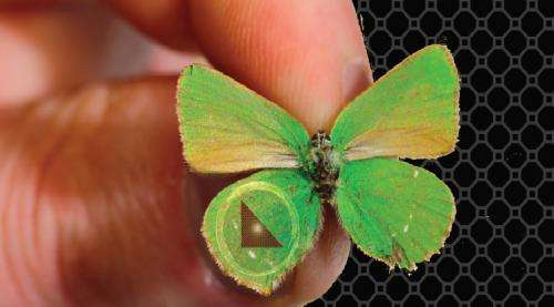 Butterfly inspires new nanotechnology