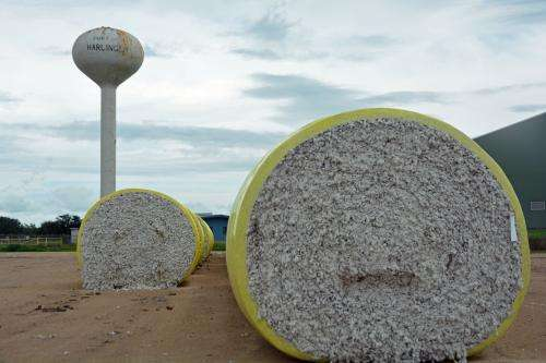 Cotton dethroned as king of South Texas crops