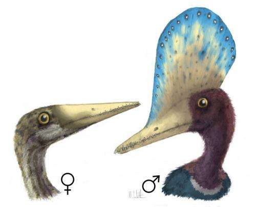 Survival of the prettiest: Sexual selection can be inferred from the fossil record