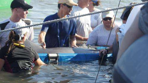 Deepwater Horizon NRDA study shows possible oil impact on dolphins