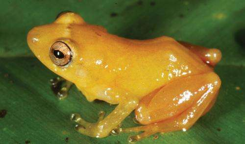 Almost 500 new species discovered